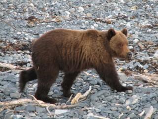 Секс рассказы бурый медведь фото 796-360