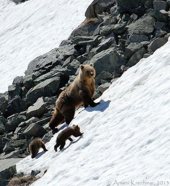 медведы2