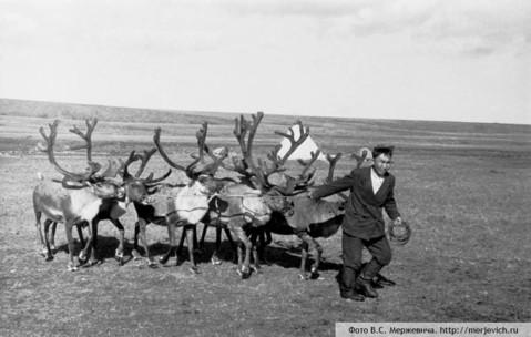 якутия-олени-фото-мержевич