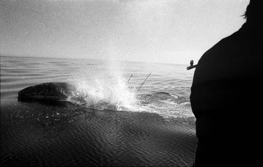 Фото К. Лемешев (216) (копия)