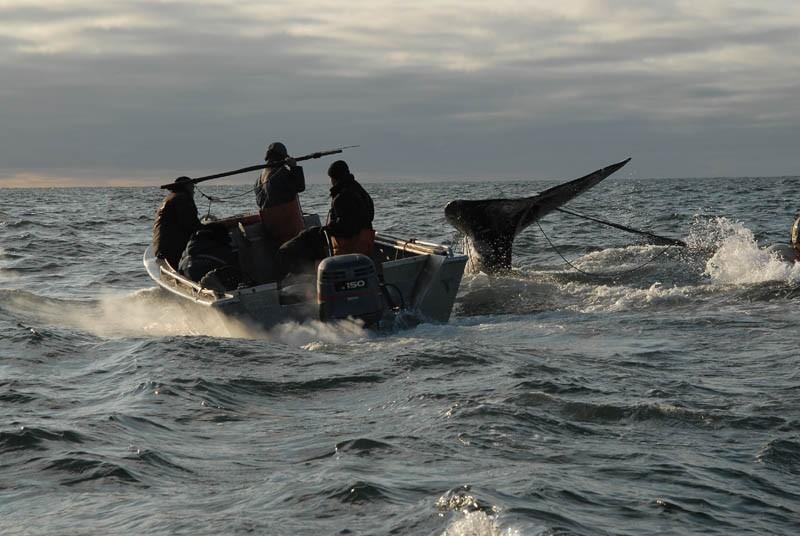 китобои