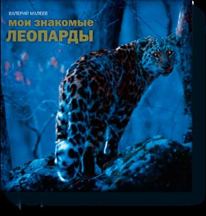 леопарде