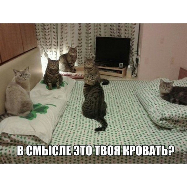 10983603_749513568498960_1044593344_n