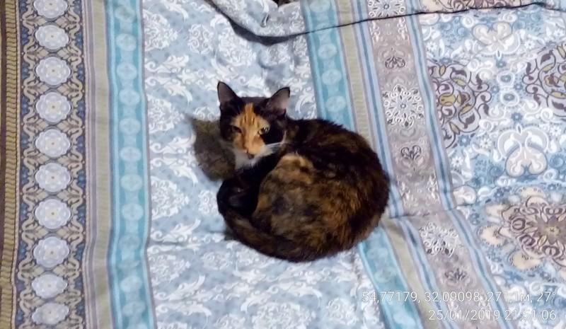 Кошка по имени Марта