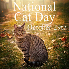 national-cat-day
