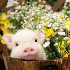 pig and flowers