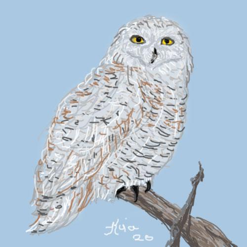 owl-4-bingo