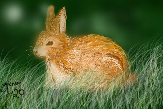 bunny-4-bingo