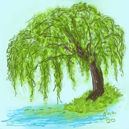 weeping-willow-for-bingo