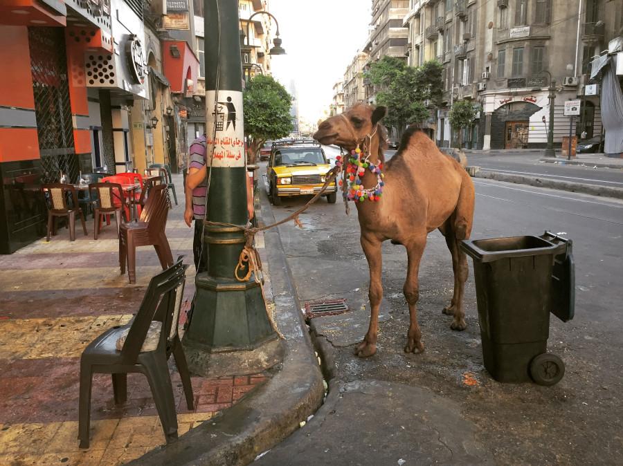 Вернулся из Александрии и наблюдения за феноменом