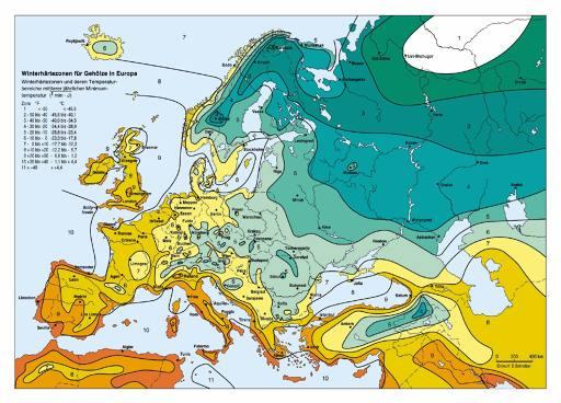 Карта зимних изотерм в Европе.