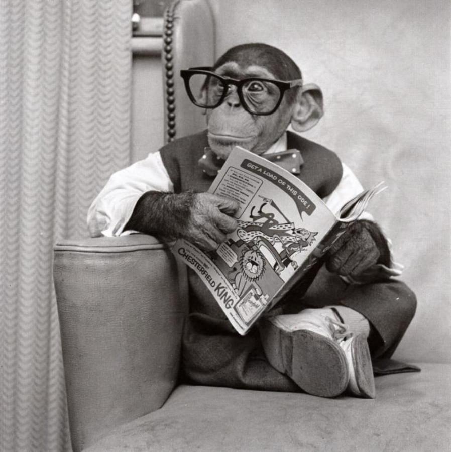"""Одна из сраильских обезьян, задержанных сегодня в аэропорту """"Домодедово"""". Большие очки и газета - чтобы казаться """"очень умной"""" обезьяной."""