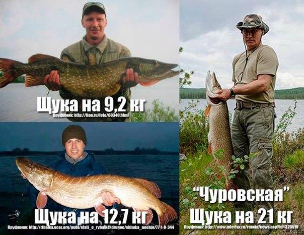 Рыба Путин