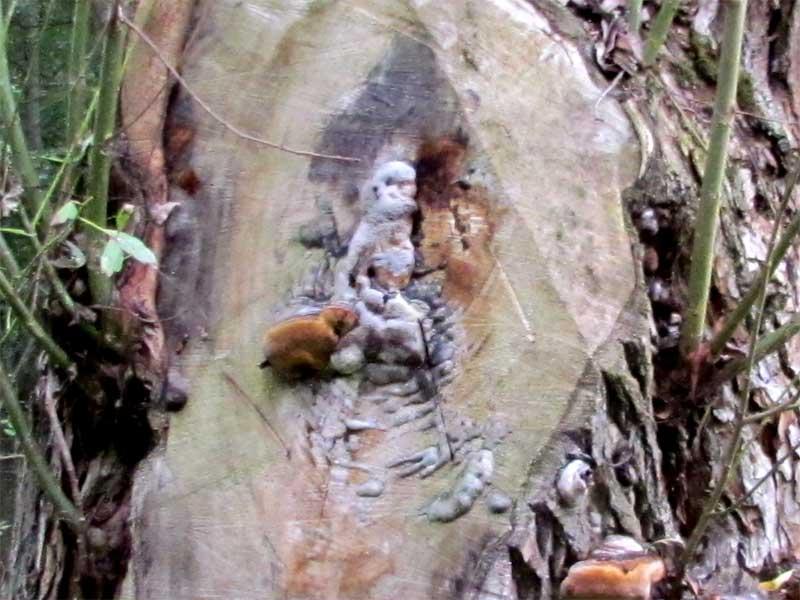 Девушка привязана в лесу фото фото 179-301