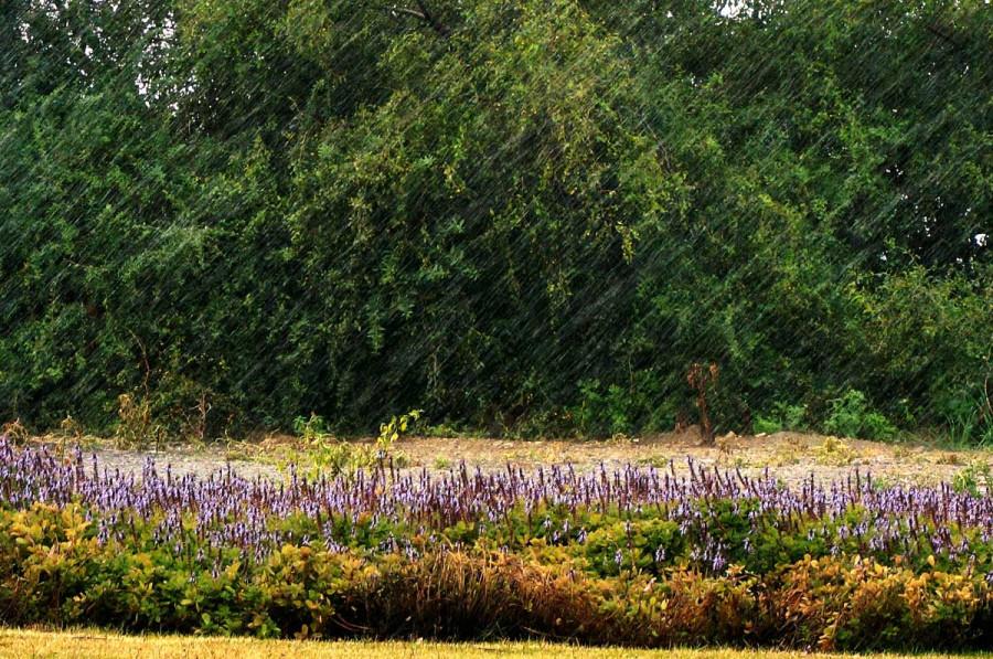 Косые дожди