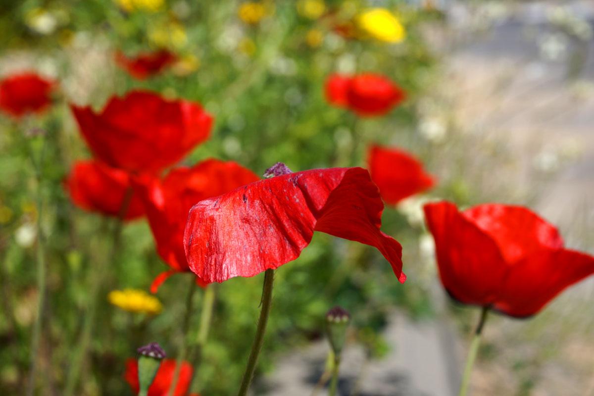 Во дворе у нас цветет акация