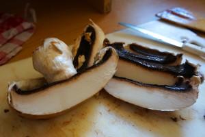 грибы2