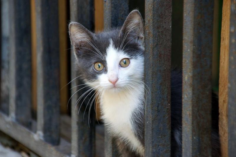 10 минут из жизни питерского котенка