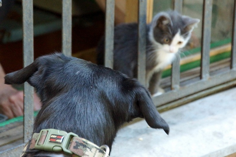 10 минут из жизни питерского котенка Санкт-Петербург
