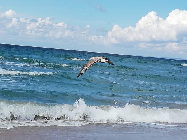 Чайка летит...