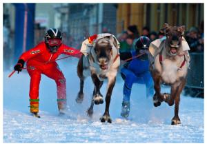 reindeer-ski-racing.jpg
