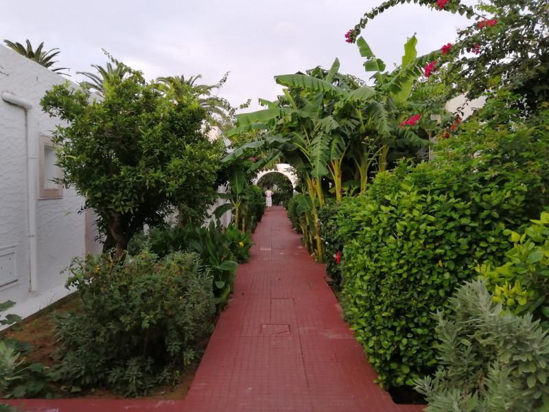 """Прогулка по саду.Сейчас мы не боимся больших расстояний. На крыльях """"Северного ветра"""" (""""Nordwind"""") я легко перелетела на другой материк и оказалась в жаркой Африке. Тунис поразил многим - культурой, растительностью, архитектурой... Предлагаю всем прогуляться по вечернему старому саду и опять окунуться в лето."""