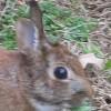 Rabbit Userpic