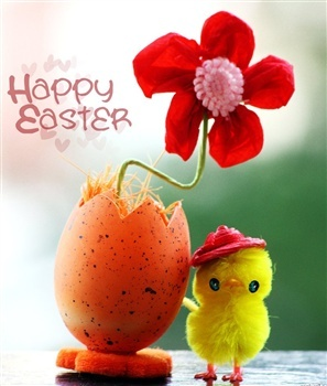 Easter-cute-new-born-chick-with-flower