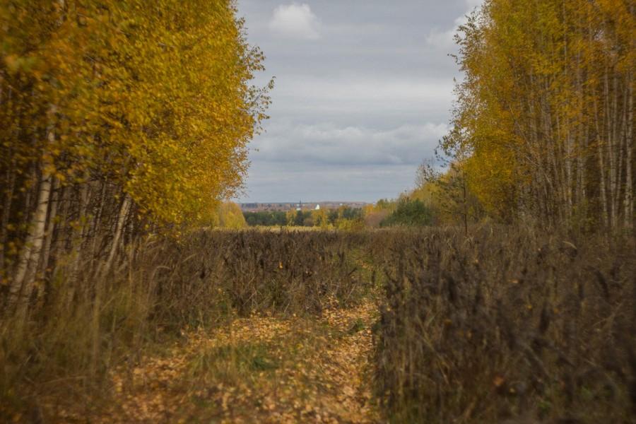 Взгляд на осень через Гелиос-44 и Canon 60D © Никита Перфильев