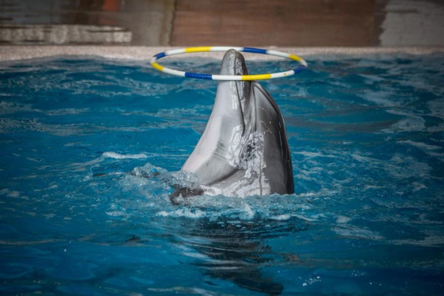 Стационарный дельфинарий в Набережных Челнах © Никита Перфильев