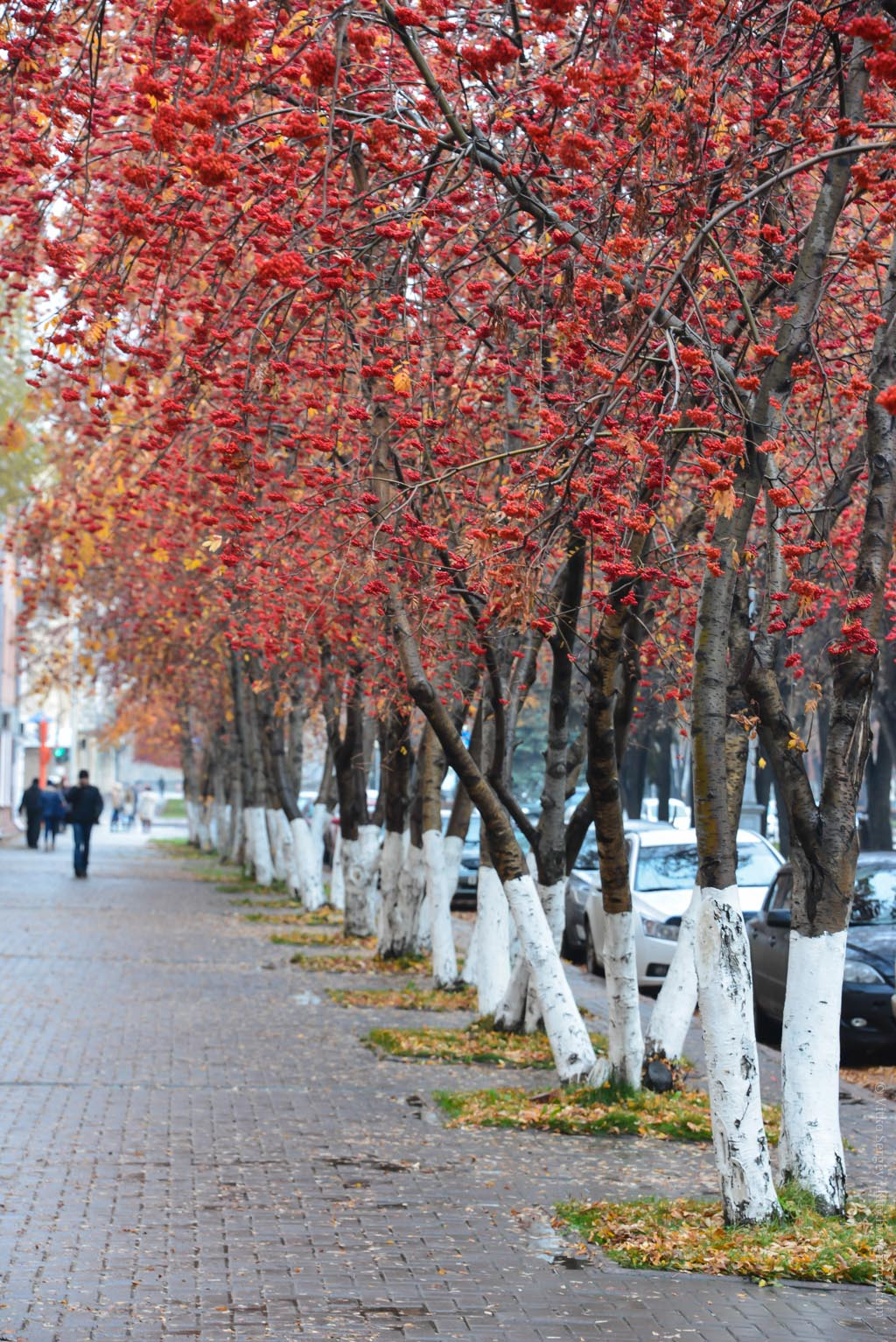 Поздняя осень в Кемерово
