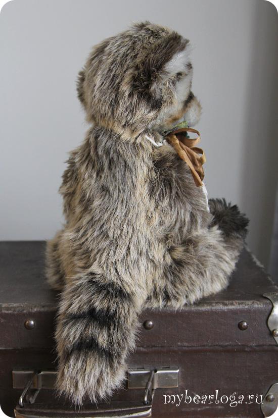 raccoon_7