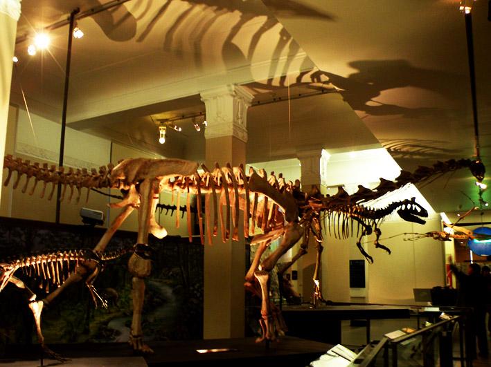 Скелеты динозавров в Национальном музее Окленда