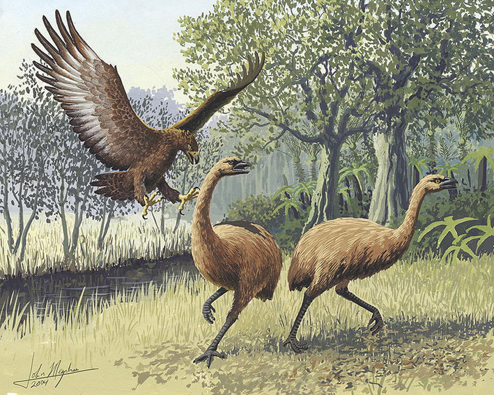 Giant Haasts eagle attacking New Zealand moa by John Megahan
