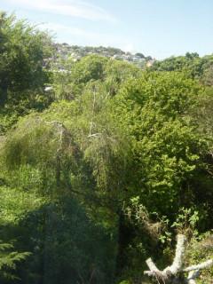 Karori bushland