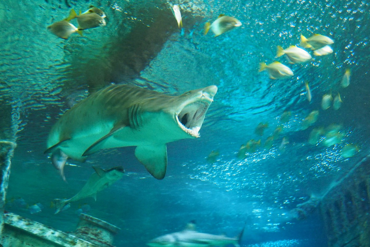 низа воронеж океанариум фото барракудами
