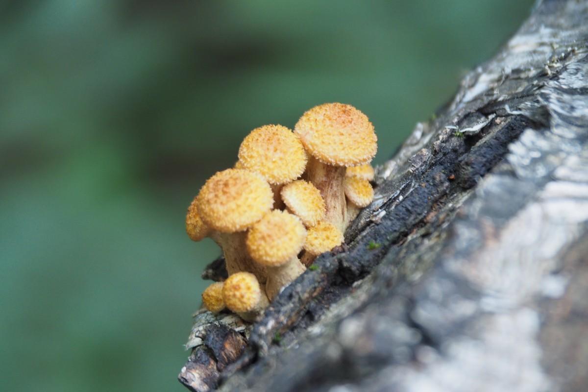 Про грибы