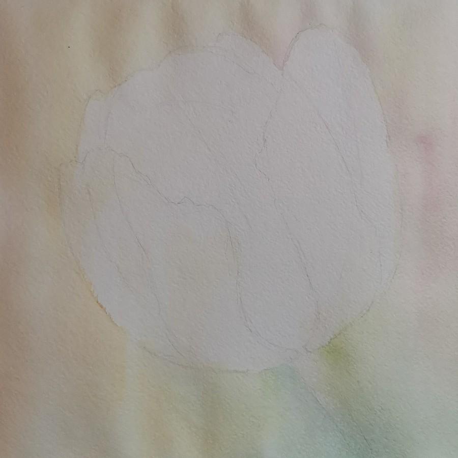 Желтый тюльпан