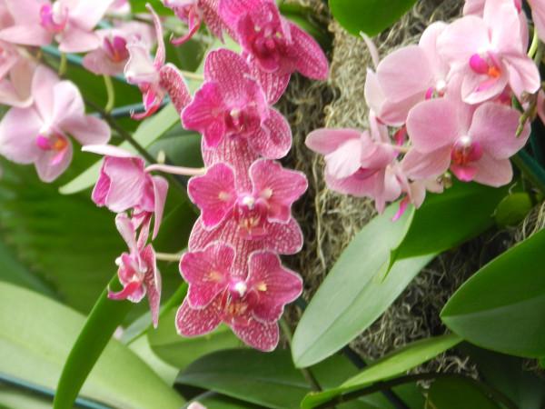 орхидеи 006
