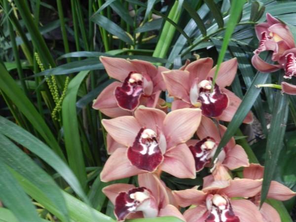 орхидеи 178