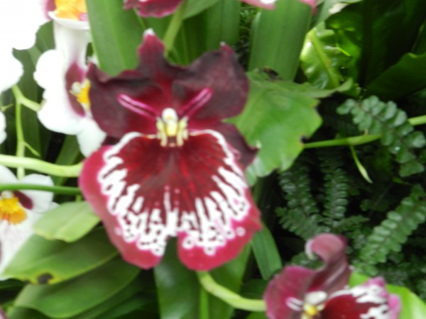 орхидеи 209