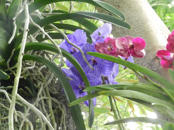 орхидеи 217