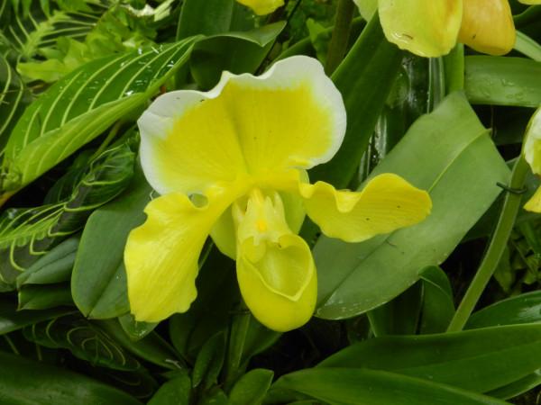 орхидеи 218