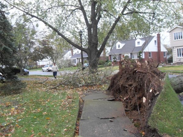 storm  Sandy 026