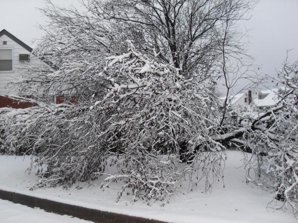 снежное утро 003
