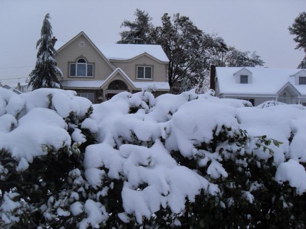 снежное утро 004