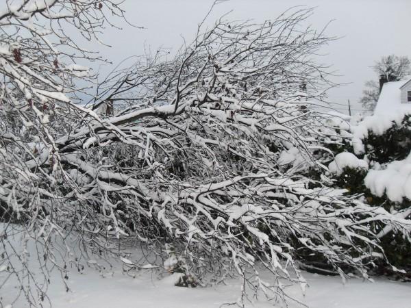 снежное утро 006