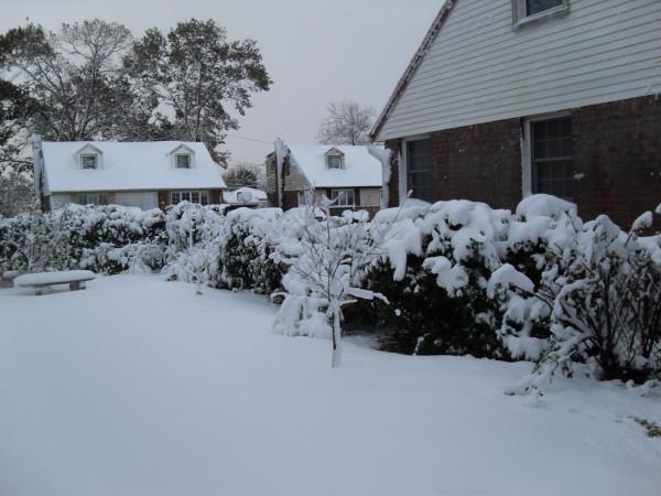 снежное утро 025