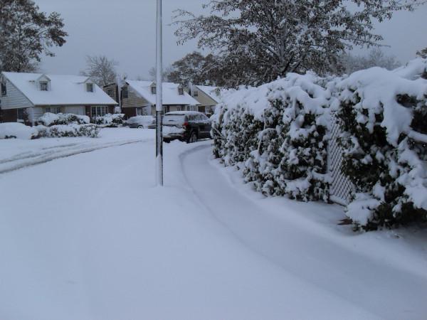 снежное утро 011