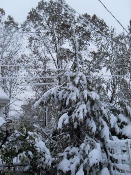 снежное утро 022